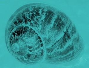 Blue Snail (2004)