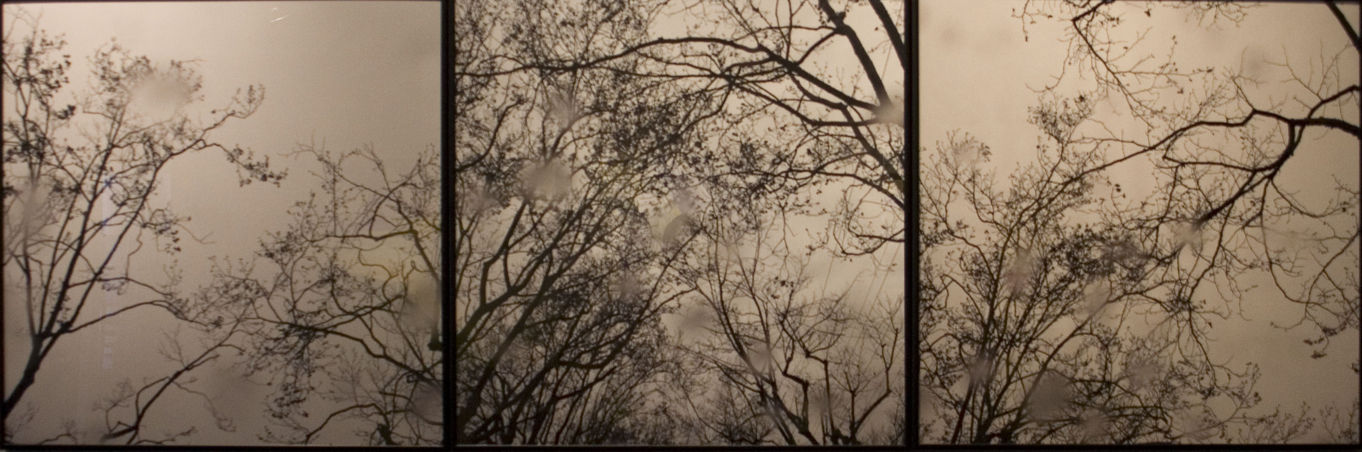 "Jan Watten, ""Gibbons in the Rain,"" Photograph."